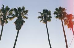 Cali Palms (addictivnature) Tags: california 50mm nifty fifty