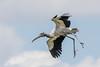 Wood Stork (Linda Martin Photography) Tags: mycteriaamericana usa wildlife delraybeach birds nature woodstork wakodahatcheewetlands florida coth coth5 naturethroughthelens ngc npc