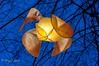 Florydilles hiver 2018 (Mike Y. Gyver ( Organize in Albums)) Tags: orange outdoor meise belgium belgique brussels bruxelles botanique blue colors contrast flower tree bluehour