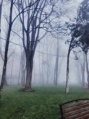 (boboruza) Tags: withoutpeople winter woods fog