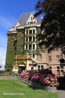 Pink Hydrangea Garden at Fairmont Empress Hotel - Victoria, British Columbia, Canada