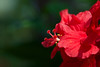 Wild flowers (Cathy's Photography) Tags: flower flowers redcolor yellow red yellowred orange purple yellowwhite white wildflower canon6d canon ef100mmmacro ef100mmmacrolens ef100mm closeup closeupflower macro