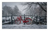 Amsterdam - red bicycle in the snow (Toon E) Tags: 2017 holland netherlands nederland amsterdam winter snow sunday cold bike bicycle white red reguliersgracht outdoor sony a7rii sonyfe2470mmf4