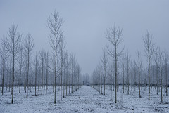¡En formación! (javipaper) Tags: snow tree forest frozen winter invierno nieve frío cold simetría white minimalismo