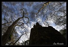 2328d (Pag...Juan Hernández) Tags: juan hernandez nikon d610 portugal sintra castillo moros cielo arboles ramas