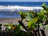Waipio Valley (StrifeRift) Tags: hawaii hawaiian big island waipio valley river ocean