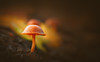 Mushroom (Dhina A) Tags: sony a7rii ilce7rm2 a7r2 smc pentax m 50mm f17 pentaxm50mmf17 bokeh manual kmount legend mushroom