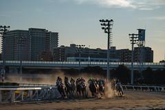 171230_854410 (keita matsubara) Tags: oimachi ooikeiba tokyo japan darby keiba 大井競馬 大井町 東京 日本
