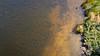 The Murk (Will Vale) Tags: zealandia karorisanctuary p9 wellington leica huawei karori p9plus