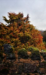 ... meanwhile in the neighbor's garden. (Zi Men Photo) Tags: dawley shropshire telford england trees colours