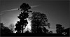 Back Catalogue. (Picture post.) Tags: landscape nature green monochrome backlight trees sunburst sky hdr paysage arbre black white gray