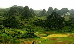 dong van geopark vietnam (hmong135) Tags: mountains karst formations vietnam rice terraces dongvan