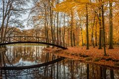 Autumn bridge (Mario Visser) Tags: autumn color fujifilm herfst landscape mariovisser nature tree voorstonden estate landgoed brummen netherlands