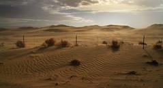 Drifting Dunes (arbyreed) Tags: arbyreed sand dunes driftingsanddunes light fence brabedwirefence hff delta oakcity blowingsand millardcountyutah