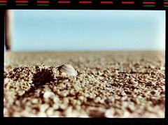 Pinamar (mavricich) Tags: playa pinamar concha arena sol viaje color agfa nikon mar agua océano