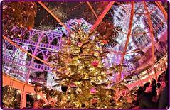 The magic of Christmas in Zurich - 1 (Ioan BACIVAROV Photography) Tags: magic winter holidays zurich switzerland hiver iarna sarbatori seasonsgreetings christmas christmastree bacivarov ioanbacivarov bacivarovphotostream interesting beautiful wonderful wonderfulphoto nikon fisheye