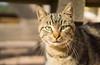 DSC08291 (esatphotographer) Tags: cat kedi animal life