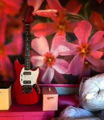 Blossoming 🌸 (Pennan_Brae) Tags: shortscale musicphotography offsetguitars sixstring guitars electricguitars electricguitar guitar offsetguitar fenderguitar fender fenderguitars fendermustang pink 604