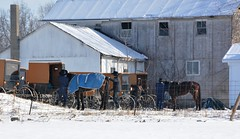 Taking care of the Horses. New Wilmington, PA (bobchesarek) Tags: barn snow cold winter freezing fence amish buggy horse padutch rural country newwilmington pennsylvania
