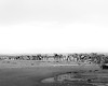 20171226_0021 (DMacK Photography) Tags: kingsbarns beach sea scotland