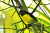 Sucrier (lehorspascal) Tags: sucrier guadeloupe