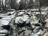 (stuant63) Tags: angus scotland cairngormsnationalpark riversouthesk bachnagairn upperglenclova