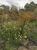 australian national botanic garden-21 (billdoyle[mobile]) Tags: australiannationalbotanicgarden act garden botanicgarden australia australiancapitalterritory anbg canberra australian billdoyle canberratripdec17jan18