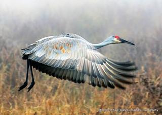 Crane In Fog