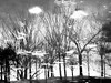 there is nowhere to go but here (szélléva) Tags: abstract blackandwhite bnw canal dreaming dreamscape paralleluniverses reflection toulouse trees paulauster