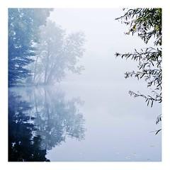 hiver sur l'étang (4) (Marie Hacene) Tags: hiver vertlepetit étang arbres brouillard