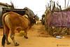 17-04-17 India-Orissa (464) Puri R01 (Nikobo3) Tags: asia india orissa dudhiabar chandrabhaga konark puri social people gentes culturas travel viajes nikon nikond610 d610 nikon247028 nikobo joségarcíacobo rural