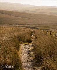 Moorland Path (neil t3) Tags: ingleborough sonya77ii minolta24105mmf3545 minolta50mmf35macro yorkshiredales ribbleheadviaduct ribblevalley bleamoor moorland