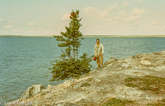 The last tree on Damant Lake, near the Elk River outflow, 1975. (frankmetcalf) Tags: tree damantlake northwestterritories canada farnorth taiga tundra barrenlands barrens canoe archaeology spruce fmnwt