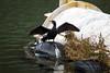 Goodbye 2017! (magiceye) Tags: cormorant bird london lonelyplanet goodbye2017 huffpost travel