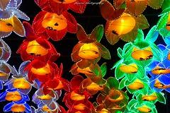 China Light ZOO Antwerp 2017-2018 (4th series) (jackfre 2) Tags: belgium antwerp zoo chinalight show lightshow chinalightshow20172018 animal flowers colours artistry night geometric sky