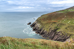 Ireland September 2016 (janeway1973) Tags: irland ireland irisch green beautiful county kerry dingle tour