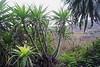 mirando hacia Carabaño _ looking towards Carabaño (Roger S 09) Tags: asturias cabranes santolaya santaeulalia carabaño casadeltilo echium