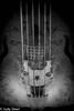 Ancient musical instrument (judy dean) Tags: judydean 2017 oxford ashmolean museum strings bridge instrument musical violin monochromebokehthursday