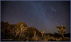 Joshuas and Geminids 0356 (maguire33@verizon.net) Tags: joshuatreenationalpark joshuatree nightsky stars yucca twentyninepalms california unitedstates us mojavedesert