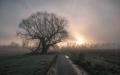 second view (Florian Grundstein) Tags: sunrise naab naabtal oberpfalz bayern heimat baum tree silhouette mft panasonic