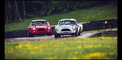 Ac Cobra 289 (1962 & 1964) (Laurent DUCHENE) Tags: peterauto dijonprenois 2017 sixtiesendurance motorsport car grandprixdelagedor ac cobra 289 shelby americancar