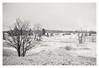 Frozen Ground (czuerbig) Tags: 24â°c 35mm 8min adotechiii adox cms20ii eifel film hohesvenn iso20 leica m6 summaron3528 analog landscape