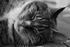 Old cat (steffos1986) Tags: cat animal closeup vintage pentaxk200d vivitar135mmf25 blackwhite bw kitty