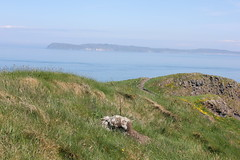 IMG_3713 (avsfan1321) Tags: ireland northernireland unitedkingdom uk countyantrim ballycastle carrickarede carrickarederopebridge nationaltrust landscape green blue ocean atlanticocean