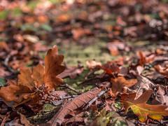 LR London 2017-300144 (hunbille) Tags: birgittelondonoktober20172lr london england nunhead cemetery magnificentseven magnificent seven victorian autumn fall allsaintscemetery all saints leaf leaves challengeyouwinner