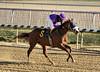 "2017-12-26 (33) r3 Elvis Trujillo on #6 Enterprise Value (JLeeFleenor) Tags: photos photography maryland md horse jockey جُوكِي ""赛马骑师"" jinete ""競馬騎手"" dżokej jocheu คนขี่ม้าแข่ง jóquei žokej kilparatsastaja rennreiter fantino ""경마 기수"" жокей jokey người horses thoroughbreds equine equestrian cheval cavalo cavallo cavall caballo pferd paard perd hevonen hest hestur cal kon konj beygir capall ceffyl cuddy yarraman faras alogo soos kuda uma pfeerd koin حصان кон 马 häst άλογο סוס घोड़ा 馬 koń лошадь laurelpark marylandraces races outdoors outside winter cold"