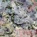 rhodochrosite, calcite, quartz, fluorine, pyrite