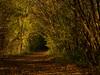 Autumn Revisited (davepickettphotographer) Tags: autumn autumnleaves autumnal trees uk cambridgeshire huntingdonshire littlepaxton naturereserve fall weather sunlight