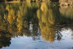 Profondo (lincerosso) Tags: fiume river autunno autumn riflessi reflections colori acqua water bellezza armonia sogno