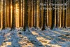 All the best everyone (Chris Jones www.chrisjonesphotographer.uk) Tags: nature beautiful white frosted frosty sunset wonderland branches trunk bark shadows cold winter snowfall snow woodland trees christmas merry